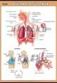 Popis produktu - Dýchacia sústava