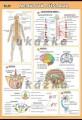 Popis produktu - Nervová sústava