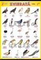 Popis produktu - Zvieratá - vtáky