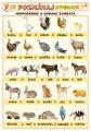 Popis produktu - Poznávaj 2 - zvieratá (domáce, voľne žijúce)