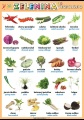 Popis produktu - Zelenina 2