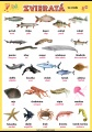 Popis produktu - Zvieratá - vo vode