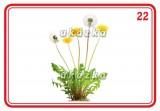 Súbor 24 kariet - kvetiny