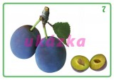 Súbor 24 kariet - ovocie