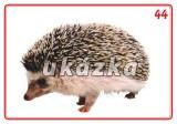 Súbor 24 kariet - voľne žijúce zvieratá