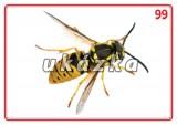 Súbor 24 kariet - zvieratá (hmyz)