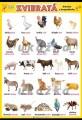 Zvieratá - domáce a hospodárske