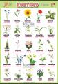 Kvetiny v angličtine