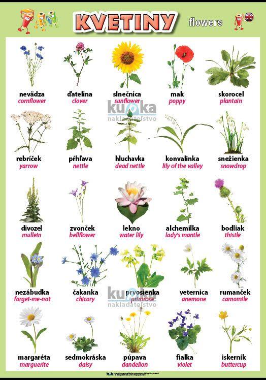 Kvetiny v angličtine nakladateľstvo Kupka