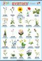 Kvetiny v nemčine
