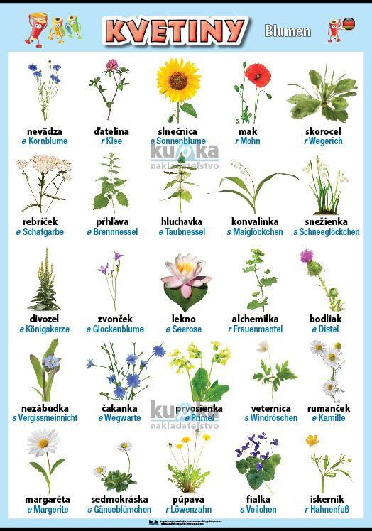 Kvetiny v nemčine nakladateľstvo Kupka