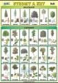 Naše stromy a kry
