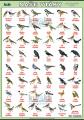 Naše vtáky