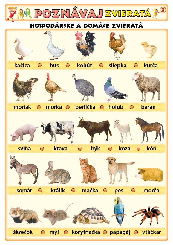 Poznávaj 2 - zvieratá (domáce, voľne žijúce)