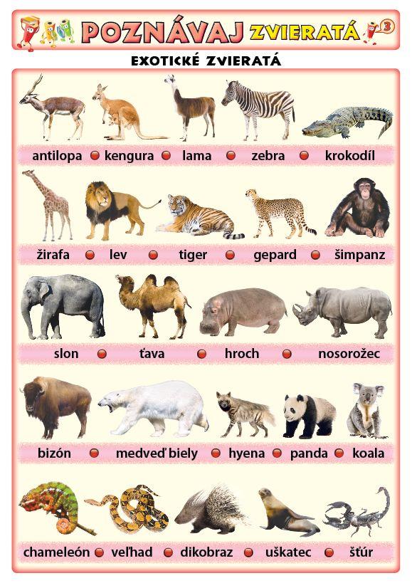 Poznávaj 3 - zvieratá (exotické, vtáky)