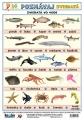 Poznávaj 5 - zvieratá (exotické 2, vo vode) nakladateľstvo Kupka