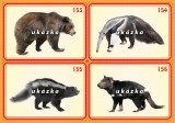 Súbor 24 kariet - exotické zvieratá 2
