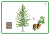 Súbor 24 kariet - stromy a kry