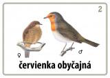 Súbor 48 kariet - naše vtáky