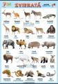 Zvieratá v nemčine - exotické