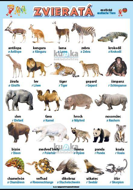 Zvieratá v nemčine - exotické nakladateľstvo Kupka