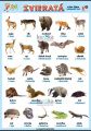 Zvieratá v nemčine - voľne žijúce