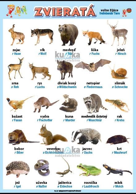 Zvieratá v nemčine - voľne žijúce nakladateľstvo Kupka