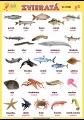 Zvieratá - vo vode